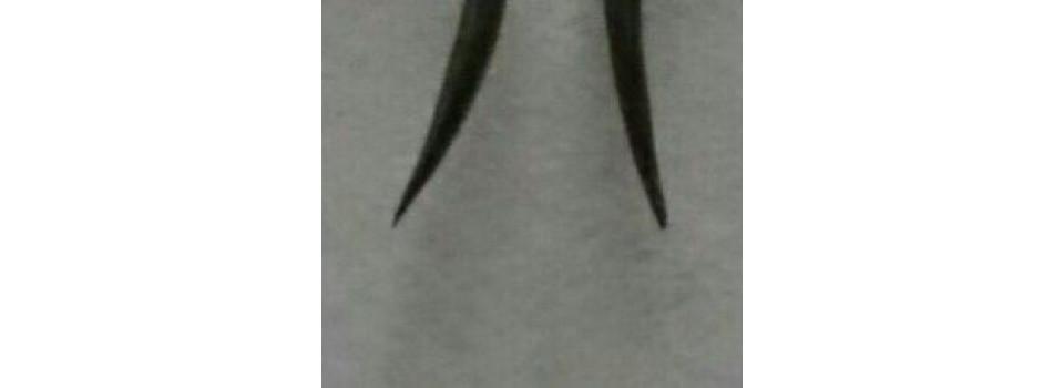 Как часто надо менять крючки на блеснах
